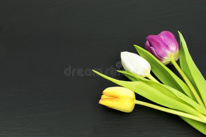 在黑表上的五颜六色的郁金香 免版税库存照片