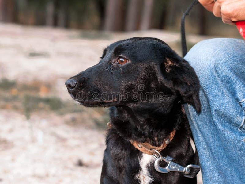 在黑逗人喜爱的狗附近的人在手上在森林里 免版税库存照片