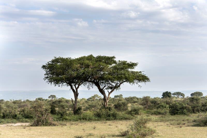 在默奇森瀑布国家公园徒步旅行队储备的大草原在乌干达-非洲的珍珠 库存照片