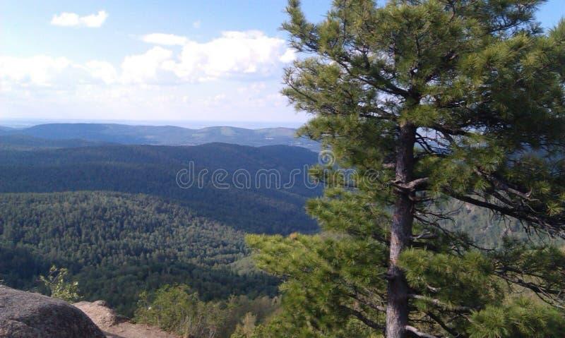在登上下的森林 免版税库存图片