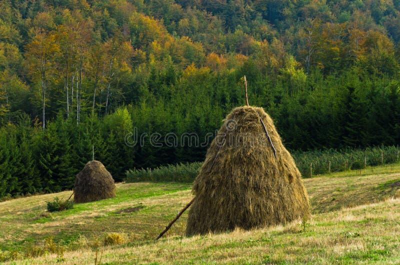 在登上Bobija,小山、干草堆、草甸和五颜六色的树风景的观点 库存照片