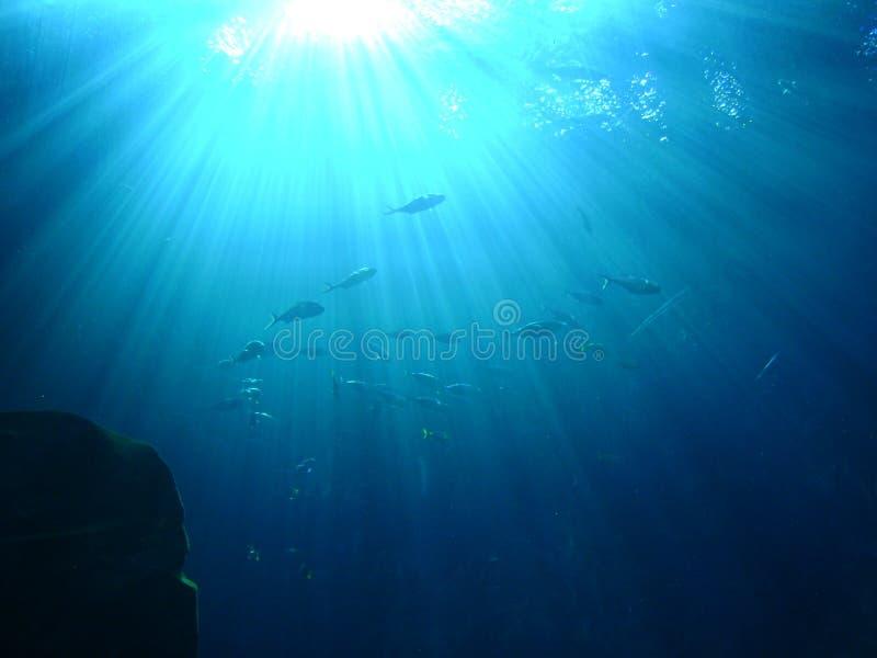 在水下的光亮的太阳 免版税库存照片