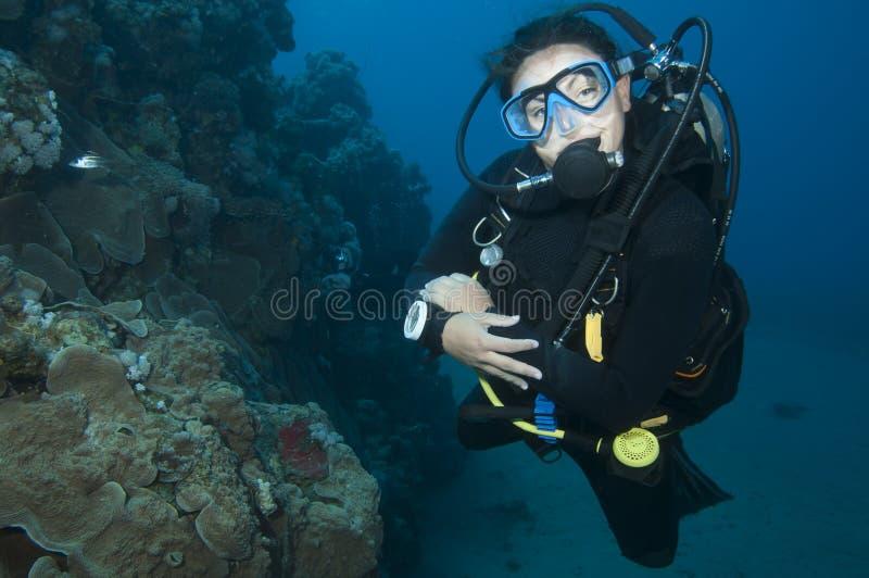 在水下的轻潜水员 免版税库存照片