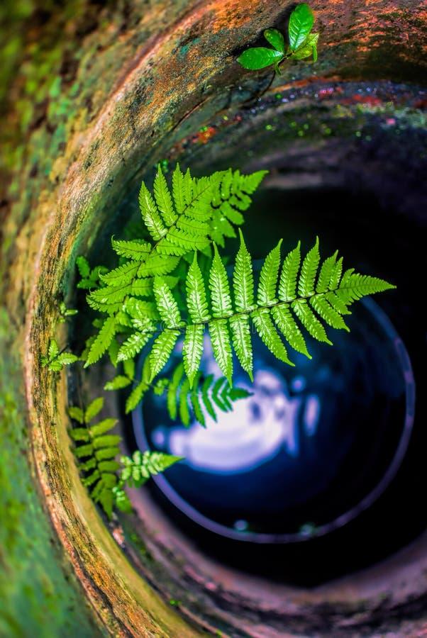在水井的蕨 库存照片