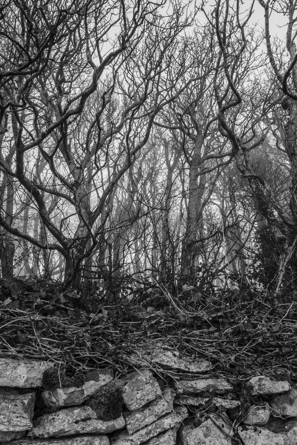 在令人毛骨悚然的薄雾的树与石墙 库存图片
