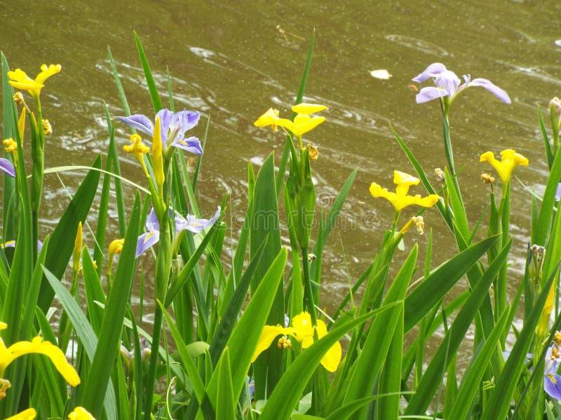 在水前面的花 免版税库存图片