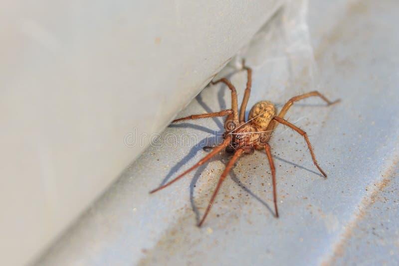 在活动中议院的蜘蛛 库存图片