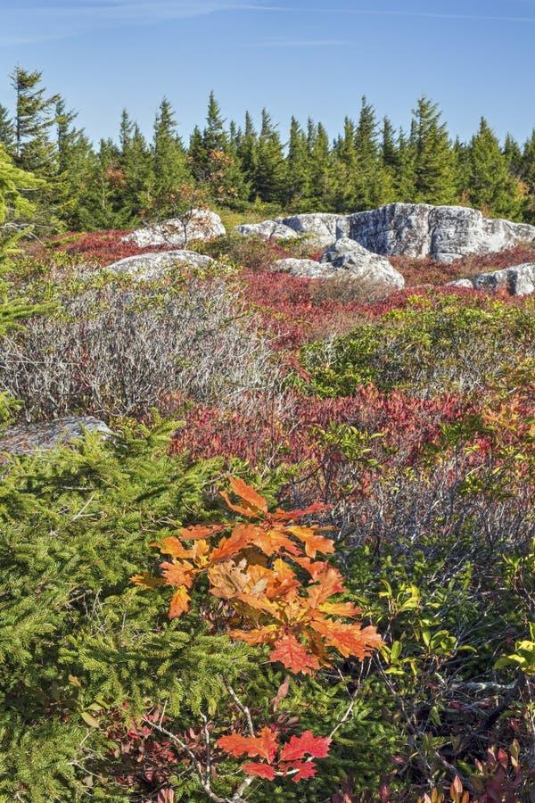 在移动式摄影车草皮的秋天颜色 免版税库存照片