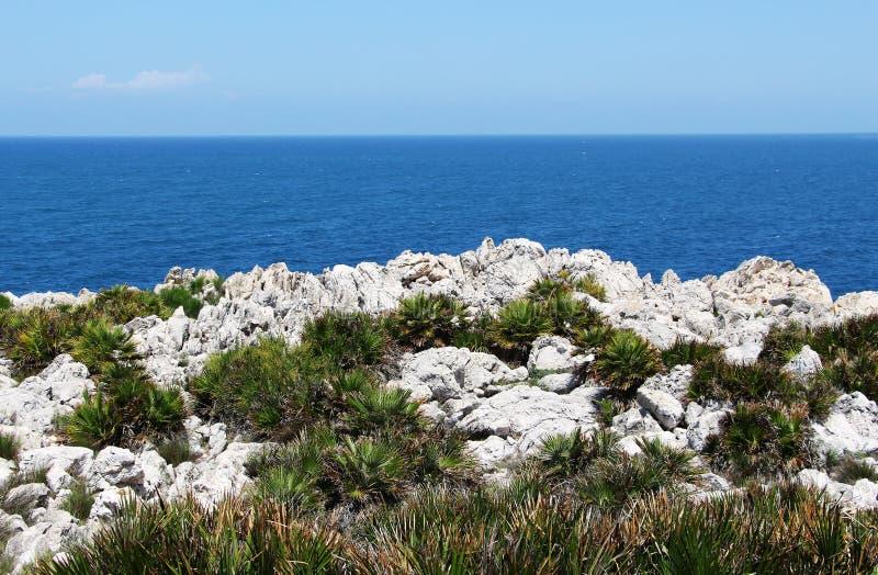 在巴勒莫附近的海岸,有矮小的棕榈的 免版税库存图片