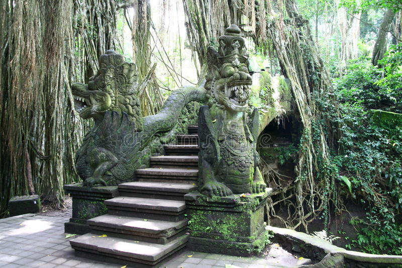 在Ubud猴子森林里在巴厘岛 免版税库存照片