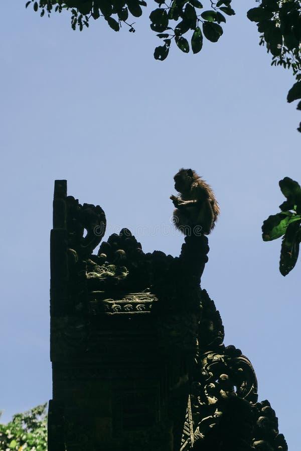 在巴厘语寺庙门顶部的猴子剪影 库存图片