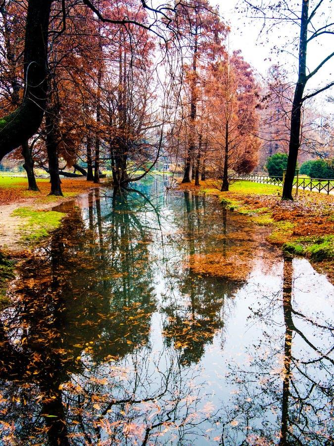 在水反映的秋天树 免版税库存照片