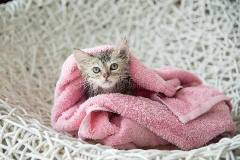 在浴以后的浸水的小猫 免版税库存照片