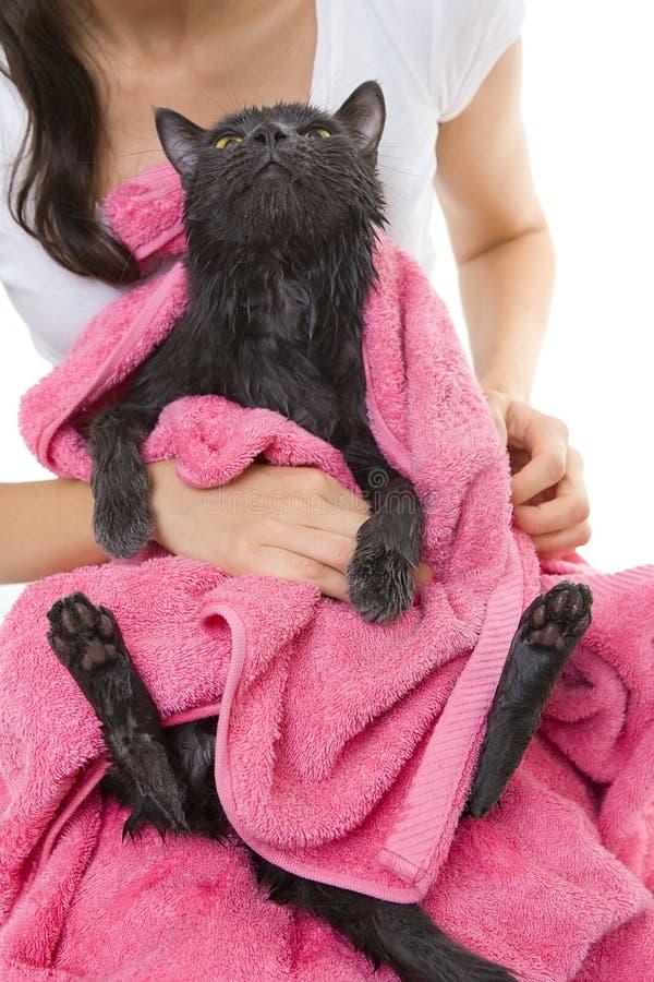 在浴以后的逗人喜爱的灰色浸水的猫 库存照片