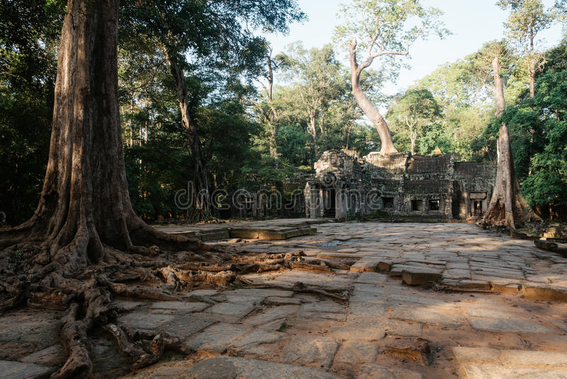 在吴哥复合体,暹粒,柬埔寨的Ta Prohm寺庙 免版税图库摄影
