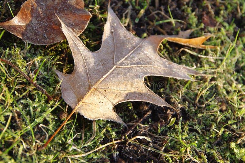 在冻土的冷淡的叶子 库存图片