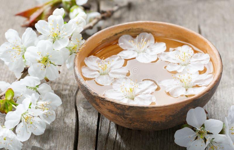 在黏土碗的浮动花樱花 免版税库存照片