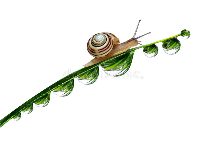 在满地露水的草的蜗牛 免版税库存照片