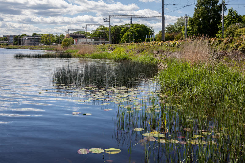 在驻地Majori附近的河 免版税库存照片