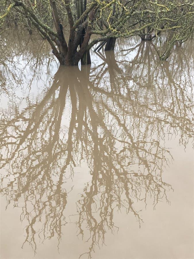 在水坑的反映 免版税库存照片