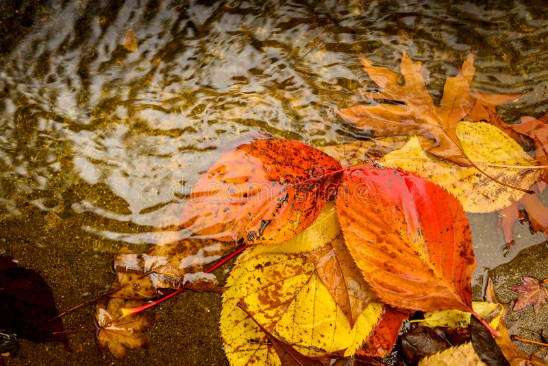 在水坑的秋叶 库存照片