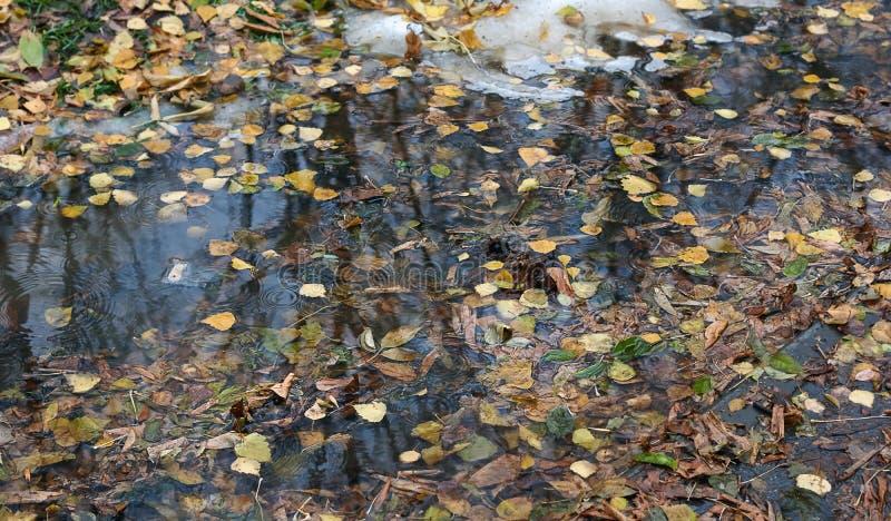 在水水坑的秋叶  库存照片