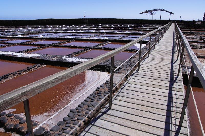 在费埃特文图拉岛的盐沼 免版税图库摄影