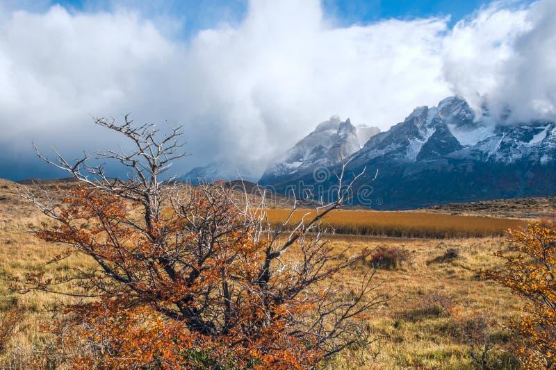 在巴塔哥尼亚的秋天 托里斯del潘恩国家公园智利 免版税图库摄影