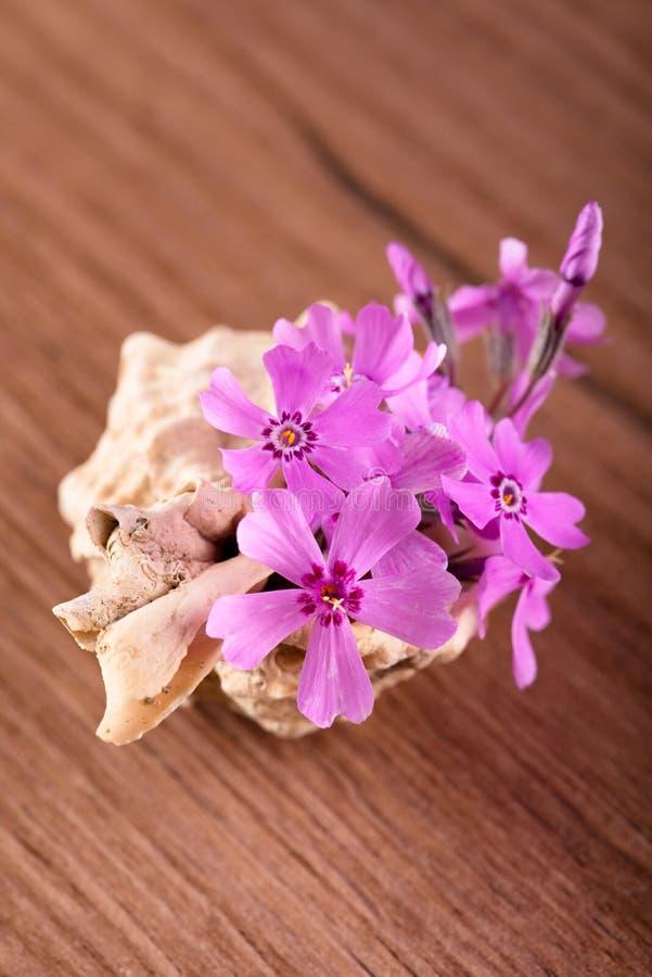 在贝壳安置的几支桃红色康乃馨 免版税库存照片