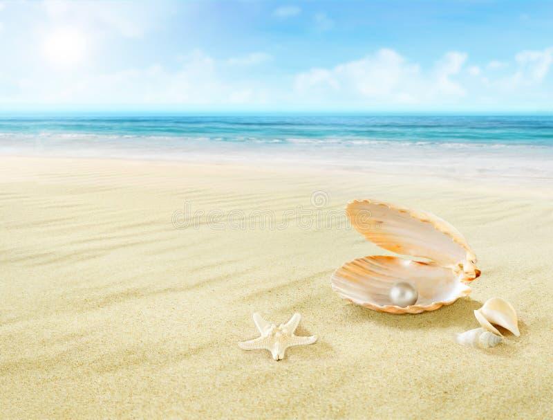 在贝壳的珍珠 免版税库存图片