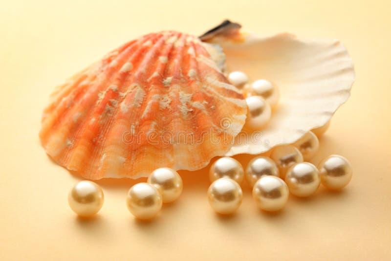 在贝壳的白色珍珠 图库摄影