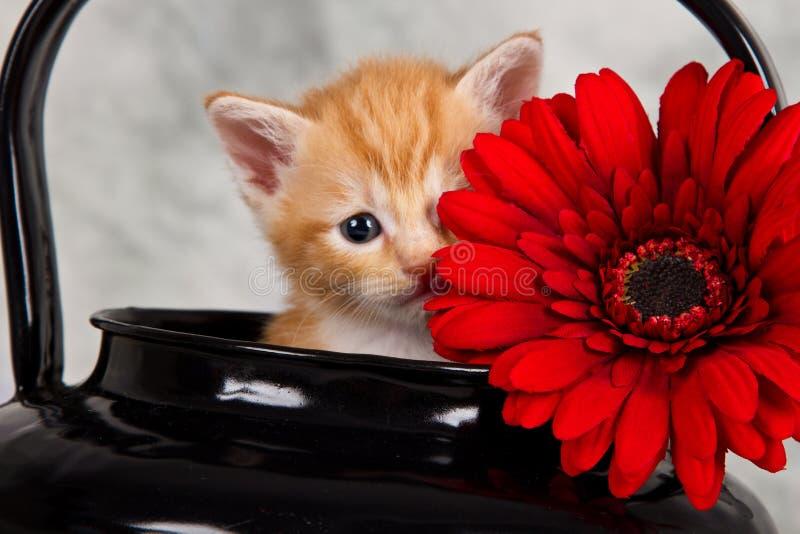 在黑水壶的小猫 库存照片