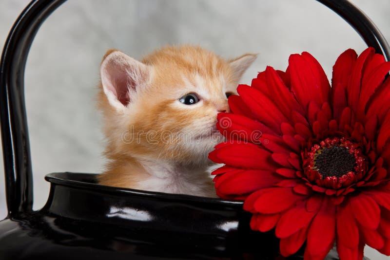 在黑水壶的小猫 免版税库存图片