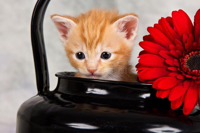 在黑水壶的小猫 图库摄影