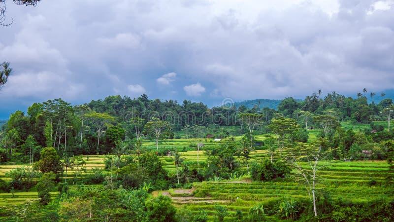 在伴奏者的米tarraces,多雨云彩调低,巴厘岛,印度尼西亚 免版税库存照片