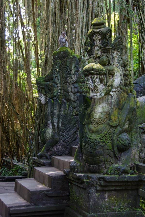 在猴子森林里跨接在Ubud,巴厘岛,印度尼西亚 库存图片