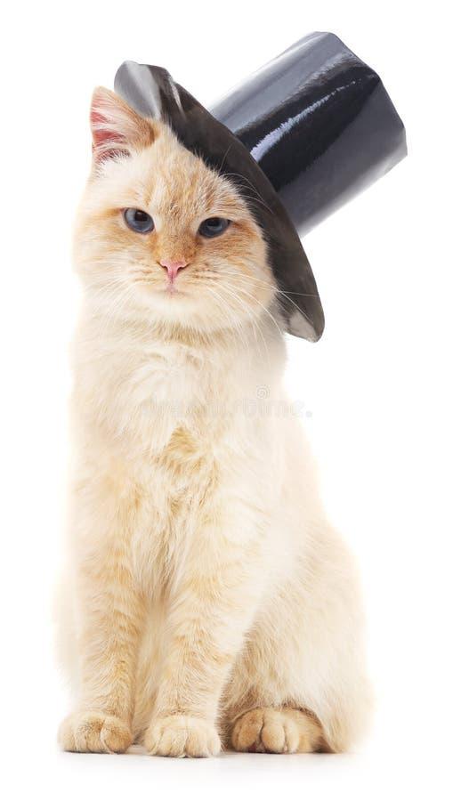 壁纸 动物 猫 猫咪 小猫 桌面 509_900 竖版 竖屏 手机