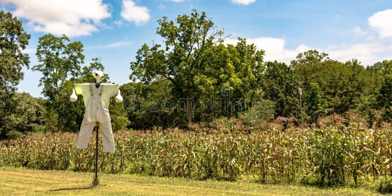 在水平一个甜玉米的领域前面的稻草人- 免版税库存照片