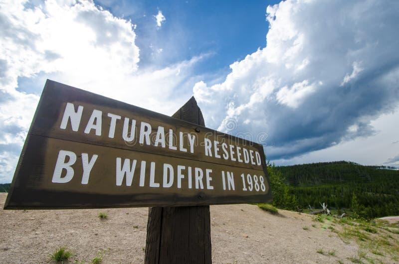 在1988年表明区域的标志在黄石国家公园由野火自然地补种 库存图片