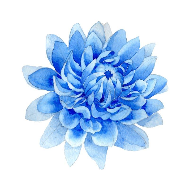 在水彩样式的野花蓝色dahila花被隔绝的 皇族释放例证