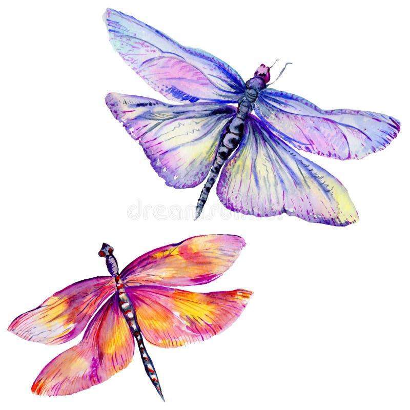 在水彩样式设置的昆虫蜻蜓 库存例证
