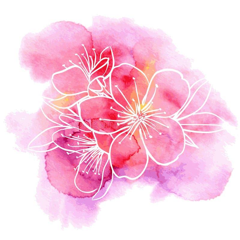 在水彩背景的樱桃花 向量例证