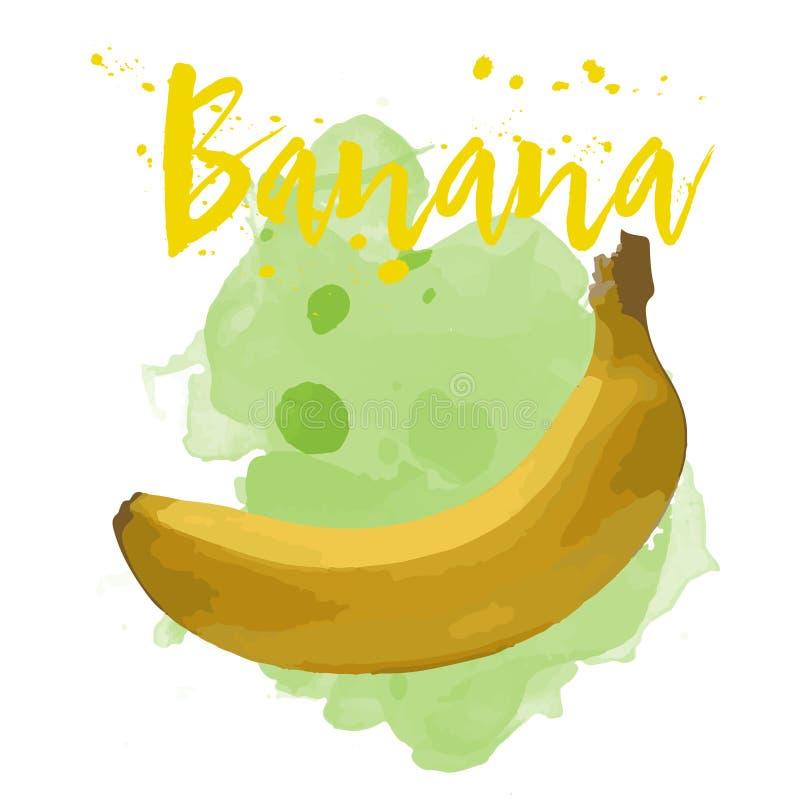 在水彩画的香蕉 传染媒介EPS 10 库存照片