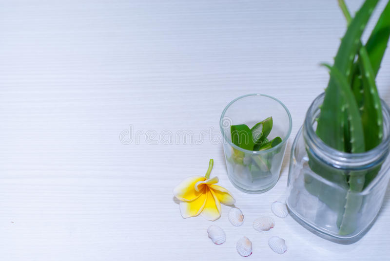 在维拉白色的芦荟新鲜的查出的叶子 免版税库存照片