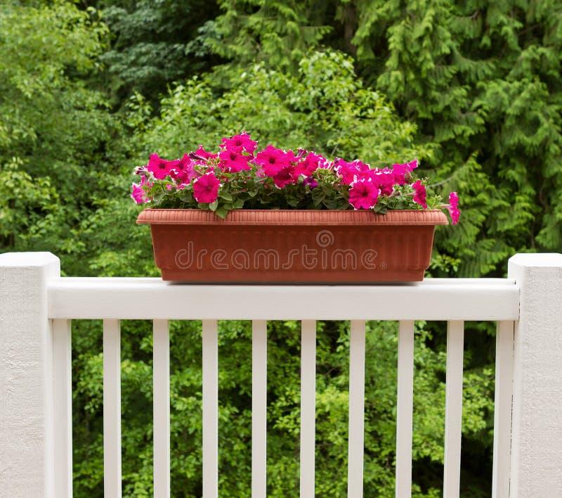 在绽放的五颜六色的花在白色露台栏杆 库存照片
