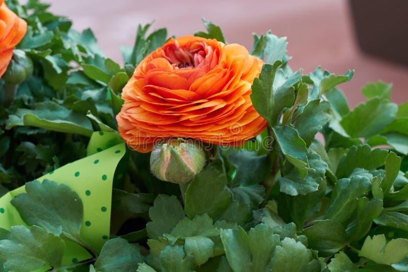 在绽放的橙色花 免版税库存照片