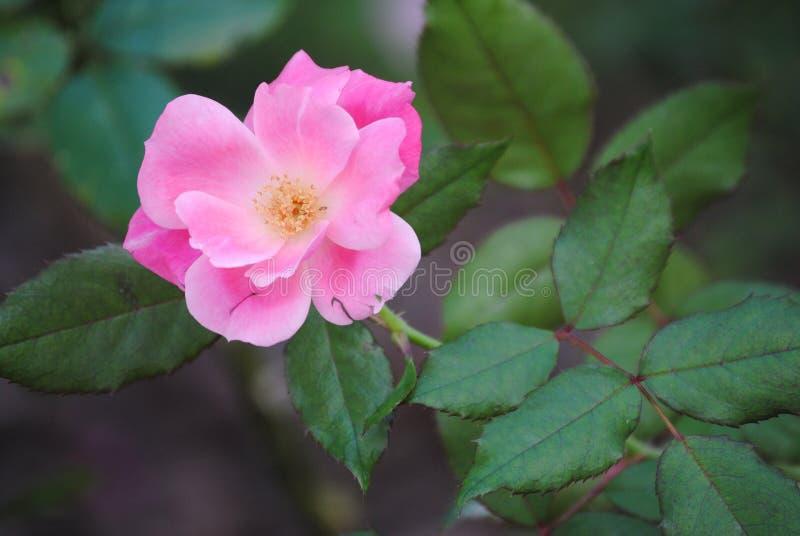 在绽放的美丽的花 库存图片