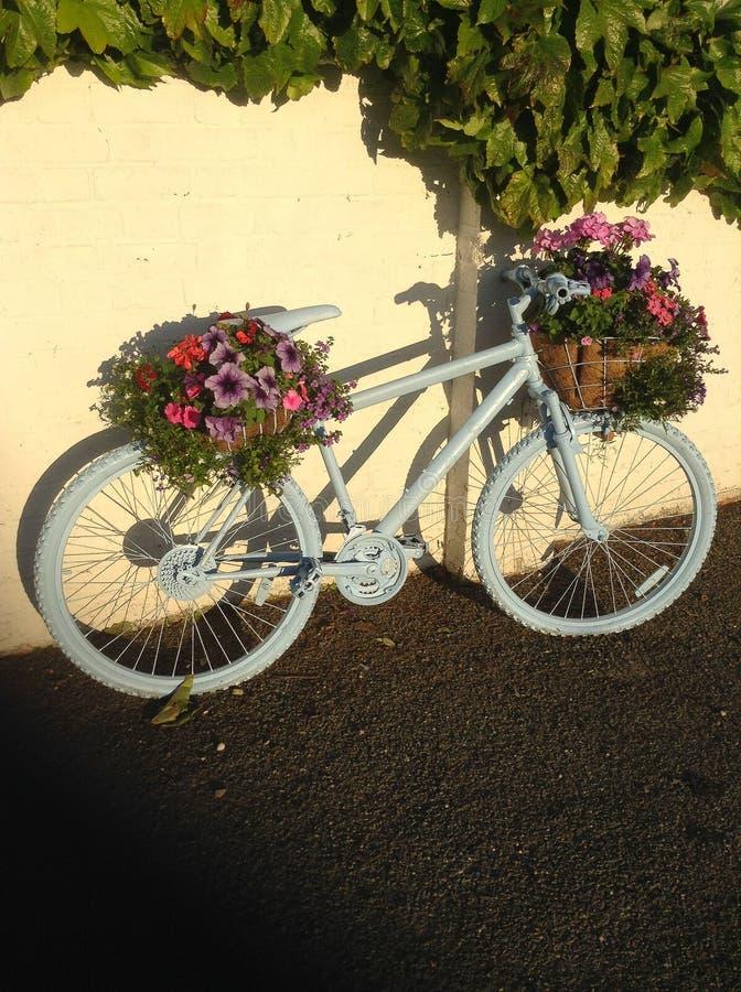 在绽放的自行车 图库摄影