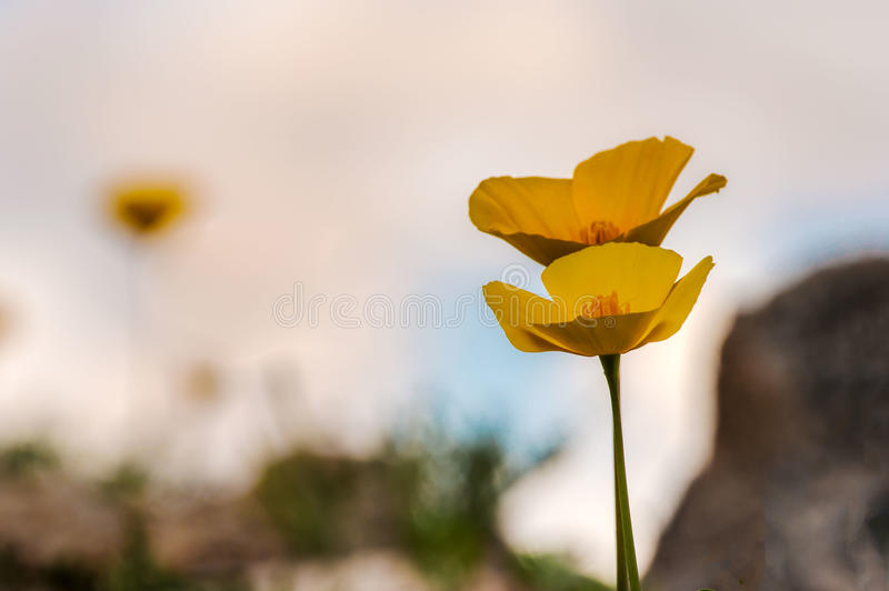 在绽放的野花 库存照片