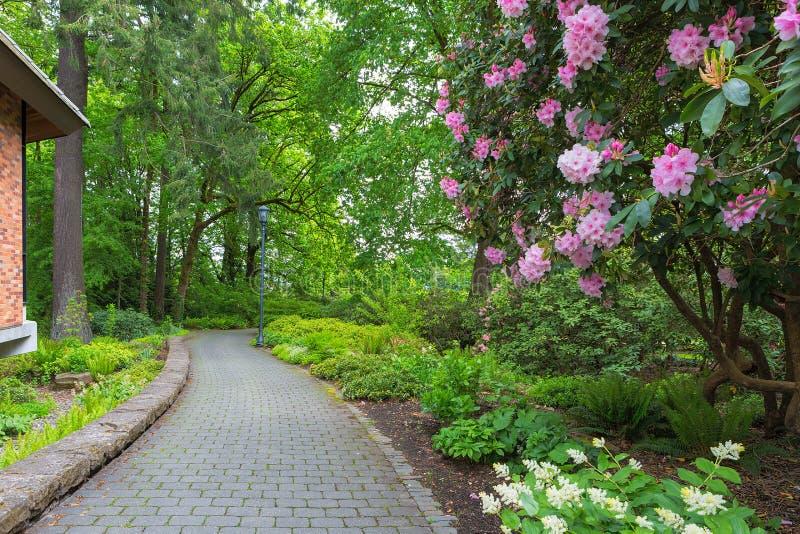 在绽放的Rhodoendron花沿庭院道路 库存照片